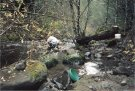 Panning for gold on Ogle Creek